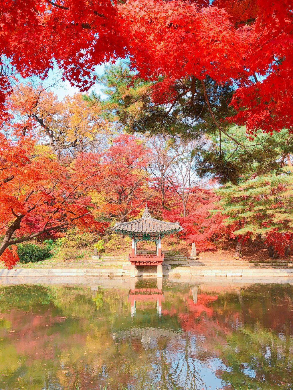 期間限定!一度は見ておきたい絶景/昌徳宮(チャンドックン)の紅葉